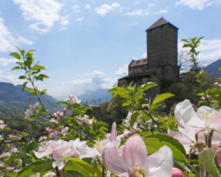 Schloss Tirol - Landesmuseum für Kultur und Geschichte Südtirols